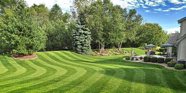 Lawn Aeration  Dethatching  Top Dressing  Fertilising  Weed Control  ...