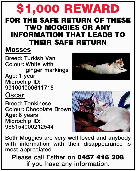 OF THESE TWO MOGGIES OR ANY INFORMATION THAT LEADS TO THEIR SAFE RETURN Mosses Breed:Turkish Van...
