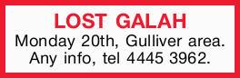 Monday 20th, Gulliver area. Any info, tel 44453962.