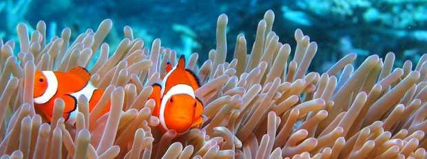 Australia's leading GreatBarrier Reef day cruise operator is seeking to fill the follow...