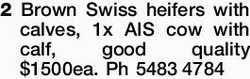 2 Brown Swiss heifers with calves, 1x AIS cow with calf, good quality $1500ea. Ph 54834784