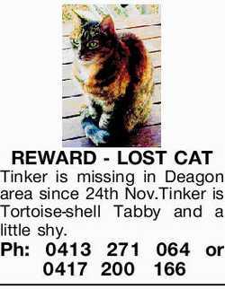 REWARD - LOST CAT Tinker is missing in Deagon area since 24th Nov.Tinker is Tortoise-shell Tabby...