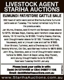 LIVESTOCK AGENT STARIHA AUCTIONS EUMUNDI FAT/STORE CATTLE SALE 202 head of cattle were sold at Stari...