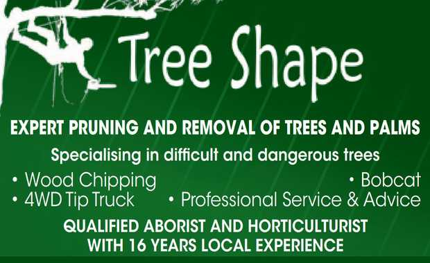 Expert Pruning and removal of trees and palms Specialising in difficult and dangerous trees 