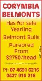 Belmont Bulls