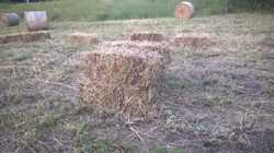 Grassy mulch hay for sale. $4 for squares and rounds from $35. Pick up Goomboorian or delivery avail...