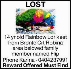 LOST 14 yr old Rainbow Lorikeet from Bronte Crt Robina area beloved family member named Flip  ...