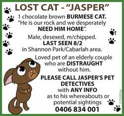 "LOST CAT - ""JASPER"" - 1 chocolate brown BURMESE CAT. ""He is our rock and we desper..."