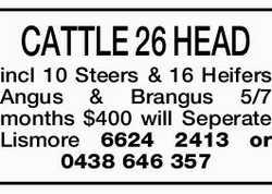 CATTLE 26 HEAD incl 10 Steers & 16 Heifers Angus & Brangus 5/7 months $400   will Sep...