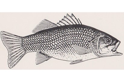 <p> <strong>FISH IN YOUR FARM DAM</strong> </p> <p> <strong>Searle Aquaculture supply a range of...</strong></p>
