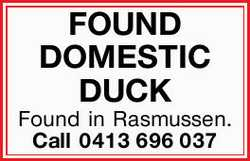 FOUND DOMESTIC DUCK 