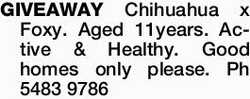 GIVEAWAY Chihuahua x Foxy. Aged 11years. Active & Healthy. Good homes only please. Ph 5483978...
