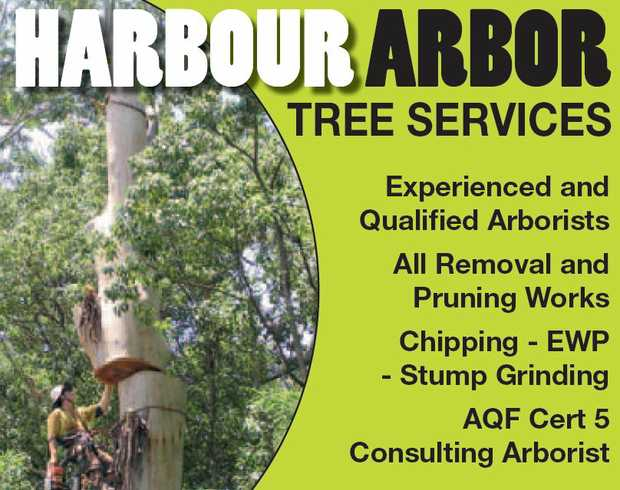 Experienced and Qualified Arborists 
