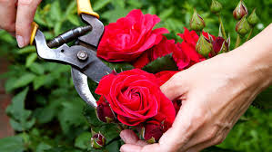 LOCAL, Honest & Reliable     All Trees & Palms,  Rubbish Roses,  Fruit T...