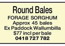 Round Bales FORAGE SORGHUM   Approx 45 bales Ex Paddock Wallumbilla   $77 incl per bale ...