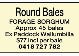 <p> <strong>Round Bales FORAGE SORGHUM</strong> </p> <p>