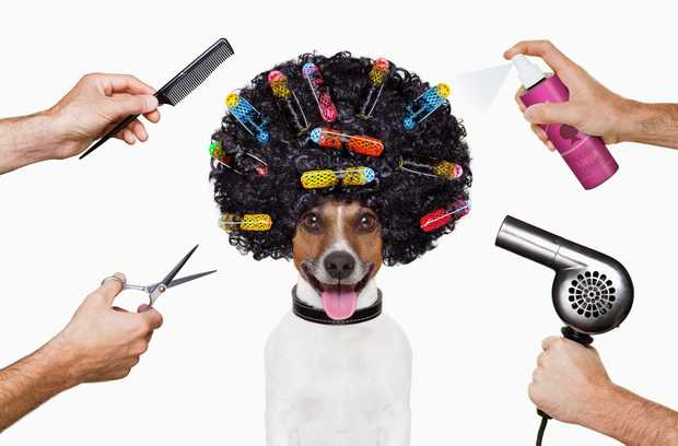 DESIGNER MUTTZ OFFER A VARIETY OF SERVICES, WHICH WILL LEAVE YOUR MUCH-LOVED PET FEELING PAMPERED...