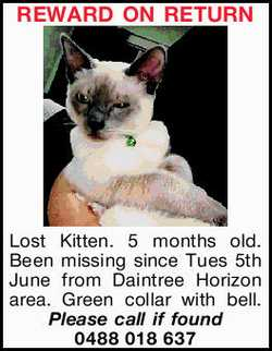 Lost Kitten. 5 months old. Been missing since Tues 5th June from Daintree Horizon area. Green col...
