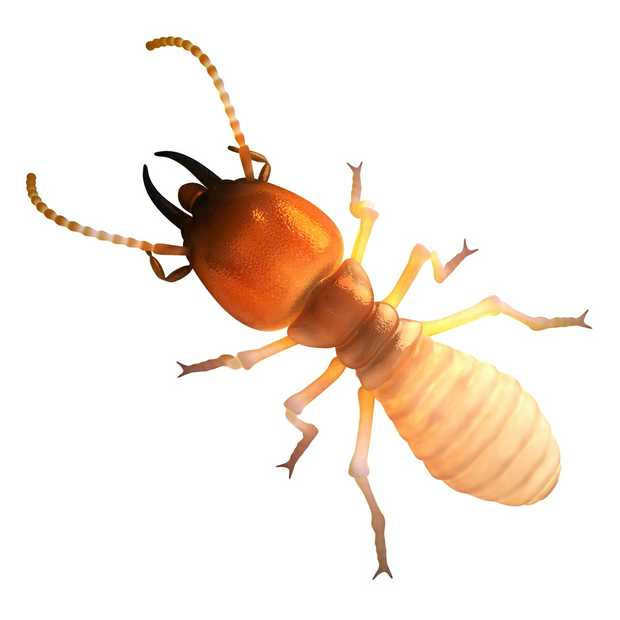 TERMITES - FREE QUOTES
