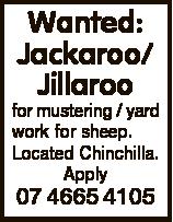 Wanted: Jackaroo/ Jillaroo for mustering / yard work for sheep. Located Chinchilla. Apply 07 4665 41...
