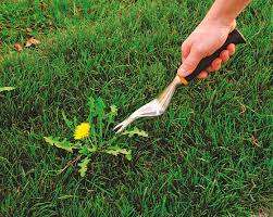 LET'S CLEAN UP   YARD MAKEOVERS   ALL GARDENING INC.   RUBBISH REMOVAL   PENS...