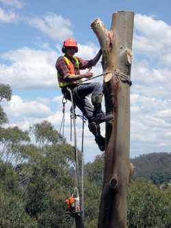 FREE Stump Grinding with Every Cut!    Tree Lopping  Pruning  Mulching  Lan...