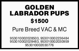 Pure Breed $1500   VACCINATED   MC 953010002028503, 953010002236484 953010002028483...