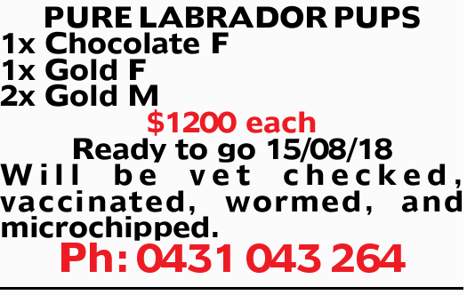 PURE LABRADOR PUPS 1x Chocolate F 1x Gold F 2x Gold M $1200 each Ready to go 15/08/18 Will be vet...
