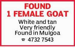 FOUND 1 FEMALE GOAT    White and tan   Very friendly   Found in Mulgoa   4732 754...