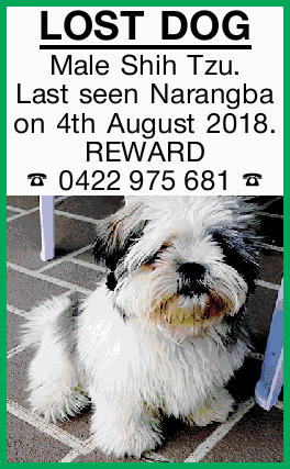 LOST DOG Male Shih Tzu.