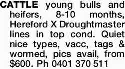 CATTLE young bulls and heifers, 8-10 months, Hereford X Droughtmaster lines in top cond. Quiet ni...
