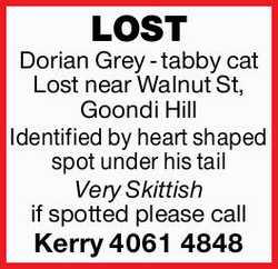 LOST   Dorian Grey - tabby cat Lost near Walnut St, Goondi Hill Identified by heart shape...