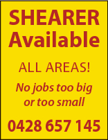 SHEARER Available ALL AREAS! No jobs too big or too small 0428 657 145