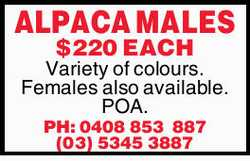 ALPACA MALES   $220 EACH Variety of colours.   Females also available.   POA.