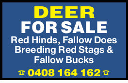 DEER FOR SALE   Red Hinds, Fallow Does   Breeding Red Stags & Fallow Bucks