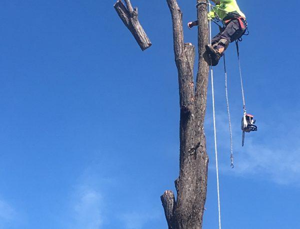 Active Tree Fellas   Professional Tree Care   Mobile 0417 770 529     Tree...