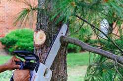 "Caloundra Tree Lopping ""Stump Grinding"" Member of the Qld Arborist Association Servic..."