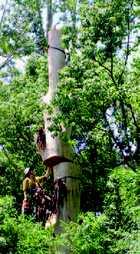 HARBOUR ARBOR TREE SERVICES