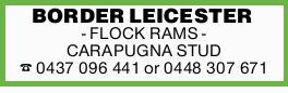 BORDER LEICESTER - FLOCK RAMS - CARAPUGNA STUD