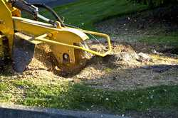Sam's Tree Services Tree removal - all types and sizes of trees from confined spaces. Tree tr...