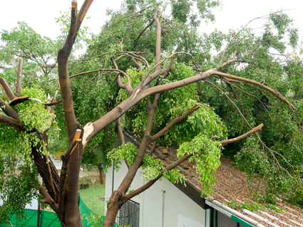 KINGAROY TREE SERVICES * Fully insured 5613059ab * 15m 4WD tower * Wood chipping * Stump grinding...
