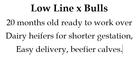 Low Line X Bulls