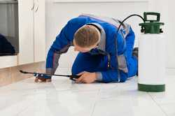 Pre-Purchase Timber Pest Inspections   Termite Inspections & Treatments   General Pes...
