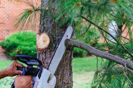 DISCOUNTED TREELOPPING Big & Small Trees, Cleanups, Insured