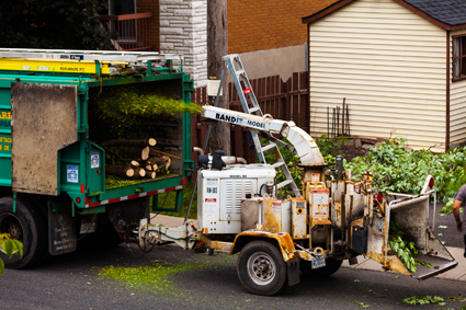 • Tree Trimming and Removal