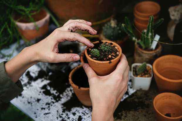 GARDENING    Mowing Pruning Sprinklers Rubbish & Handyman   Call John!