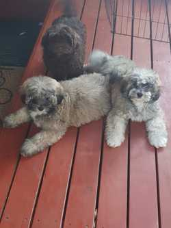 3 Males -mix of colours   Vaccinated & microchipped   Ready to go from Sat 17th...
