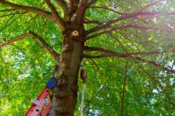 Tree Felled & Removed Pruning & Thinning   High Climbing Specialist Wood Chipping...