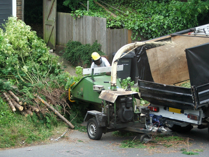 • Tree Trimming and Removal   • Wood Chipping   • Palm Tree Cleaning   ...