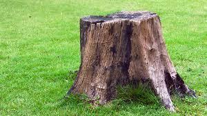 Stumps •  Pruning •  • Mulching •  •...